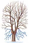Do not prune more that 25% of a tree's branches.